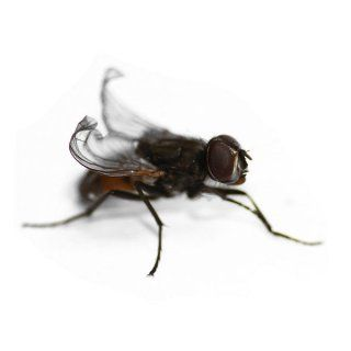 Terfly Dendroshop Frösche Futtertiere Terraristik