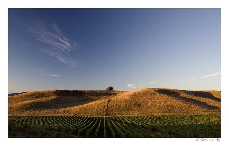 Settlement Vineyard, Omaka Valley in Marlborough, New Zealand
