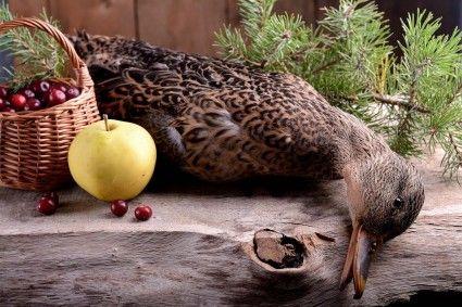 """W listopadowym numerze """"Łowca Polskiego"""" nasz felietonista dowodzi, że o ile Polacy przepadają za kaczką pieczoną długo i mięciutko, to Francuzi zdecydowanie wolą mięso różowe w środku, czasem krwiste."""