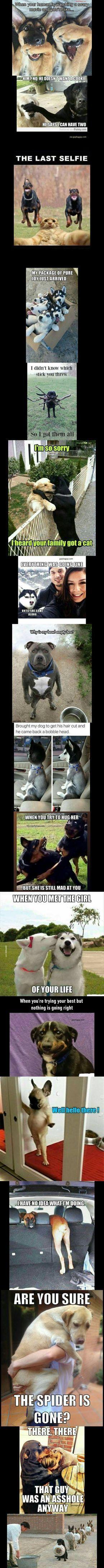 Top 18 Funniest Jokes ft. Funny Dogs #funnydogs