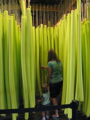 noodle forest, this is such a strange but interesting sensory idea, suspend pool noodles from the ceiling