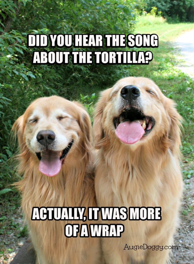Funny Golden Retriever Tortilla Joke Meme Postcard by #AugieDoggyStore @linabina23 … in case you needed another dog meme.