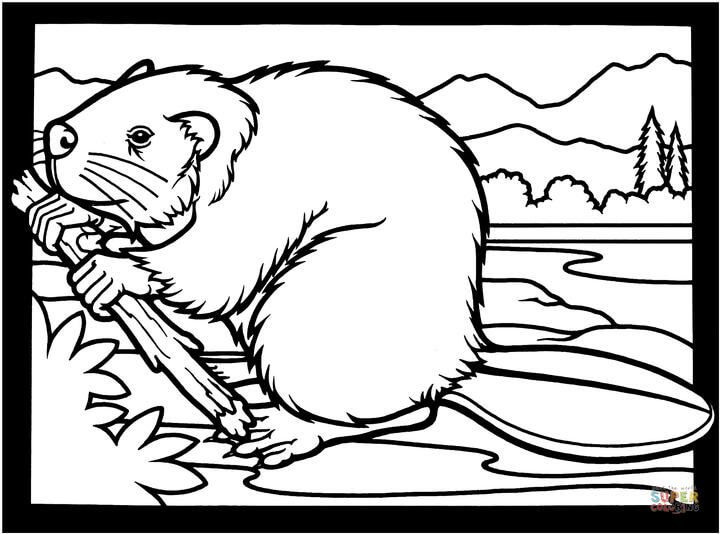 Canadian Beaver Coloring Page Free Printable Coloring Pages