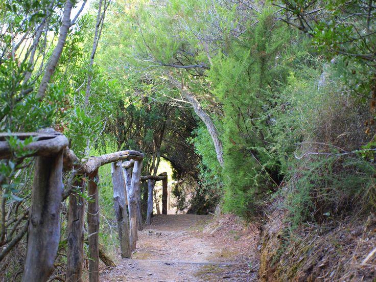 Il percorso, di circa un km, fa immergere il visitatore tra la flora del territorio. Arbusti della macchia mediterranea e alberi creano suggestivi archi naturali che incorniciano la vallata sottostant