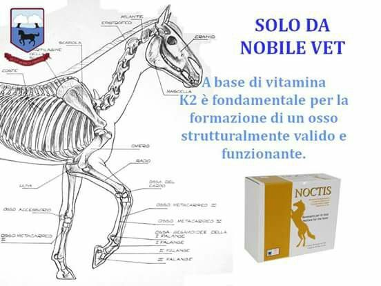 Noctis - Nobile Vet product only