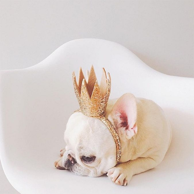 Theo Bonaparte, a tired glitter crowned pup
