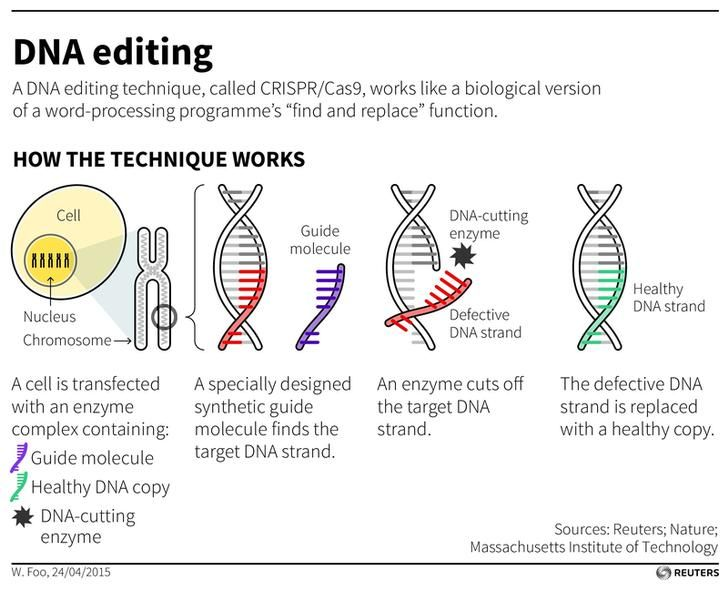 28 best ALL About Gene editing images on Pinterest Physical - copy blueprint editing app