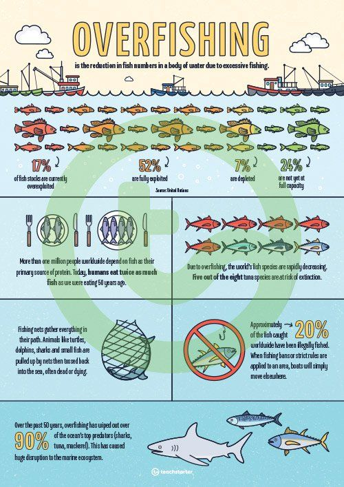 Overfishing Infographic Poster Teaching Resource | GD4 ...