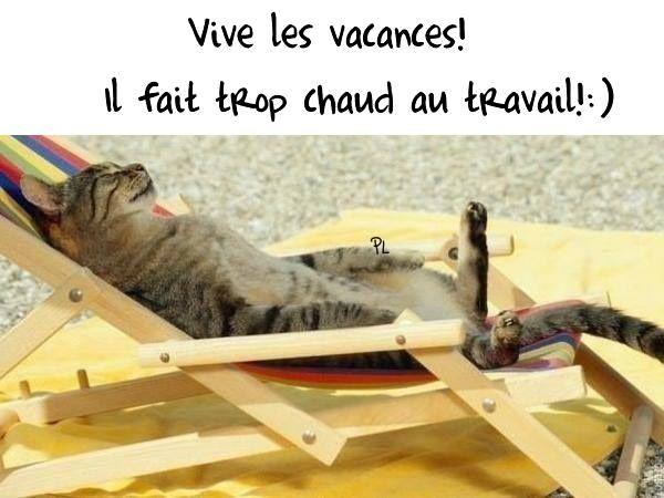 Vive les vacances! Il fait trop chaud au travail! :) | Kat slapen, Schattige katten, Katten en ...