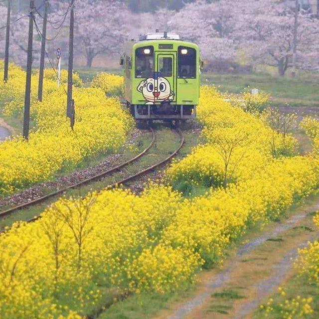 【t_nassan】さんのInstagramをピンしています。 《おはようございますm(__)m 春が待ち遠しく感じます。  #平成筑豊鉄道  #ちくまる君 #菜の花  #桜  #四月  #蔵出し  #写真撮ってる人と繋がりたい  #写真好きな人と繋がりたい》