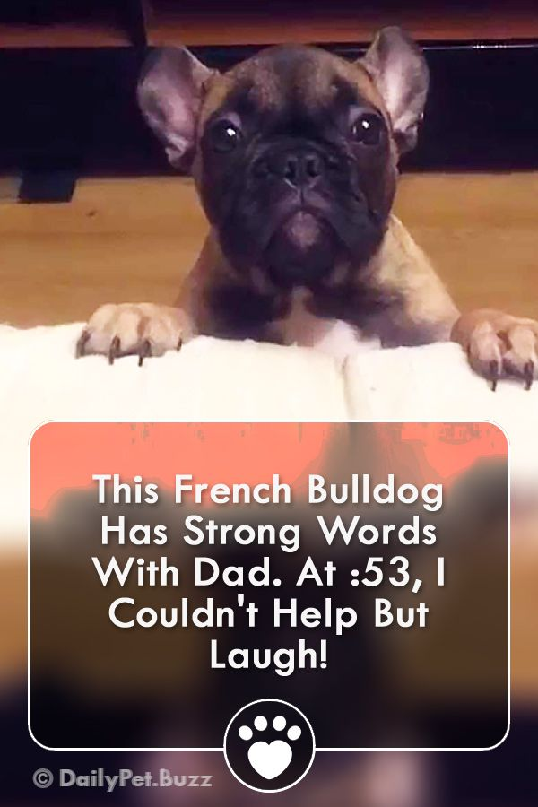 This French Bulldog Is Too Funny Bulldogs Funny Via