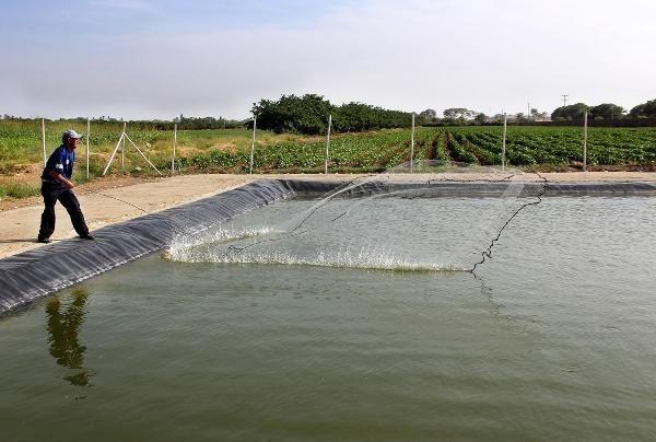 La producción mundial de alimentos de origen acuático alcanzaría las 186 millones de toneladas en el 2030 - nearural.com