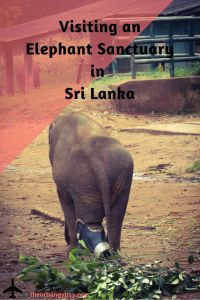 Visiting an Elephant Sanctuary in Sri Lanka