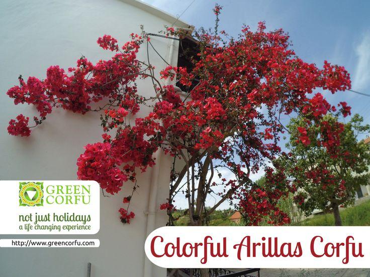 Colorful! This is #Arillas #Corfu ! Check http://www.greencorfu.com?utm_content=bufferb41b9&utm_medium=social&utm_source=pinterest.com&utm_campaign=buffer for all the information regarding your vacation!