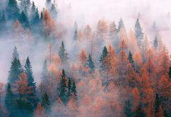 Wallpaper forest, tree, fog, autumn