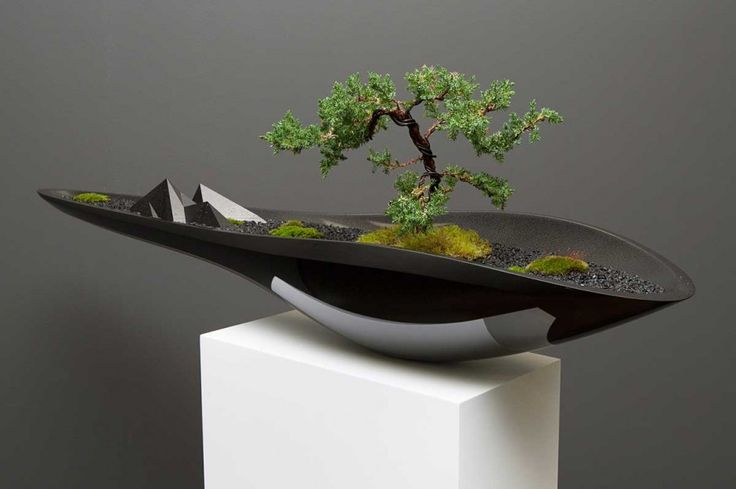"""The automative industry desinger """"Adrian Magu"""" makes contemporary bonsai"""
