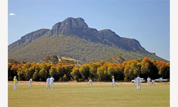 Cricket at the base of Mt Sturgeon