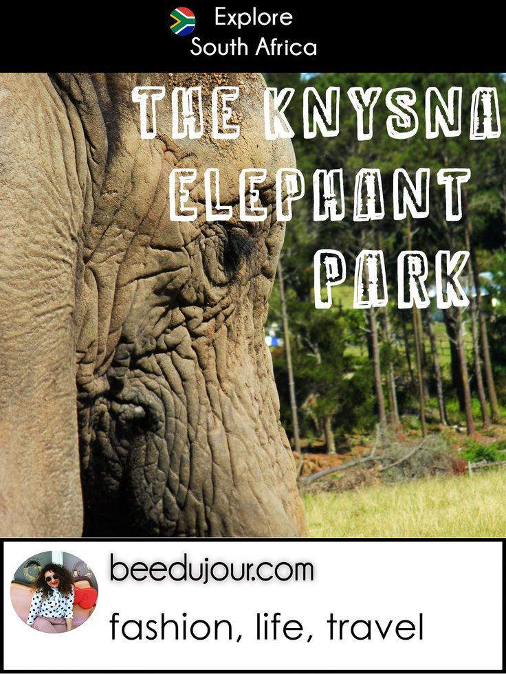 The Knysna Elephants