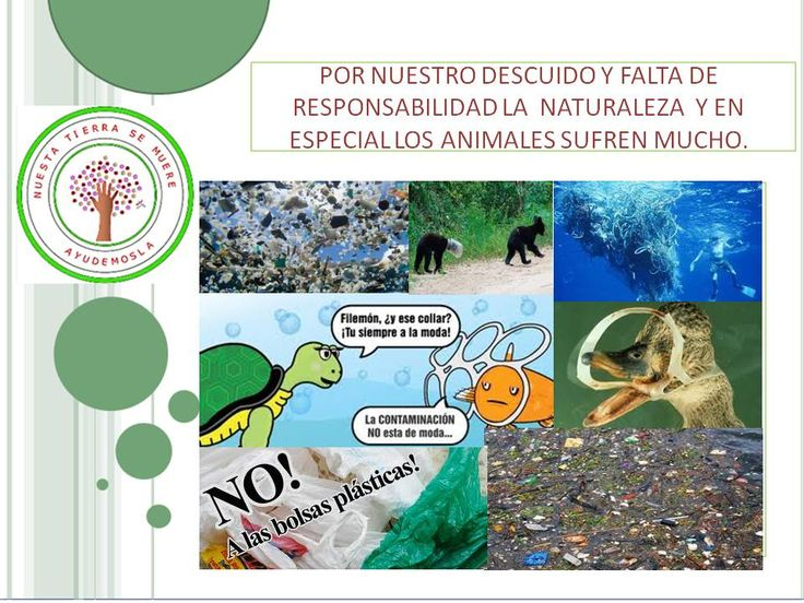 actuar con responsabilidad frente a la naturaleza