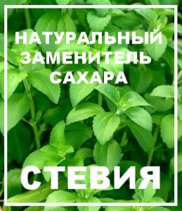 Стевия - натуральный заменитель сахара - Планета Ом
