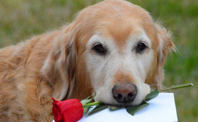 6 Ways to Love Your Pet on National Love Your Pet Day | Care2 Healthy Living