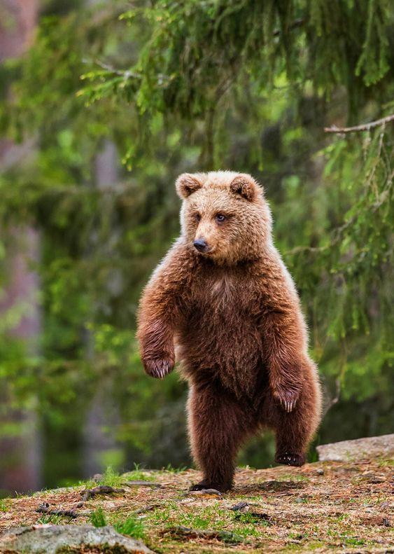 человек, идущий медведь картинка его жена продала