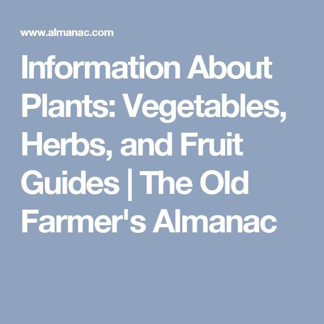 Information About Plants: Vegetables, Herbs, and Fruit Guides | The Old Farmer's Almanac