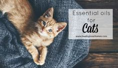 Essential oils for Cats: Learn how to use essential oils for your cats safely, dilute properly and what you can diffuse around them.