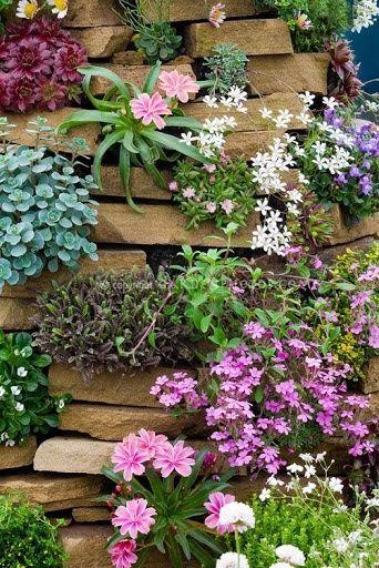 softgardening:  Alpine Rock Garden Wall by Judy White