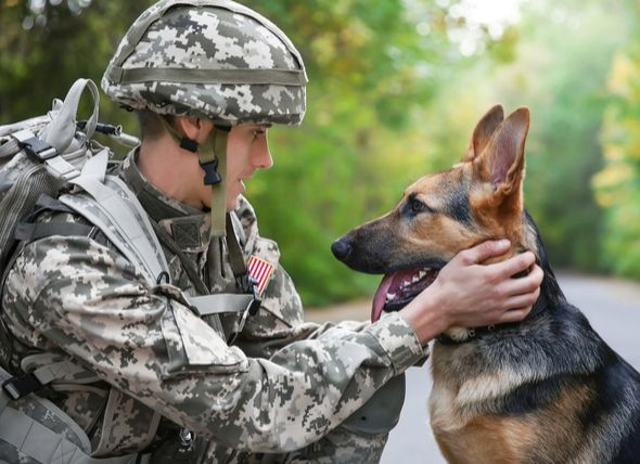 Vietnam War Veterans Unveil Military Dog Memorial Petmd