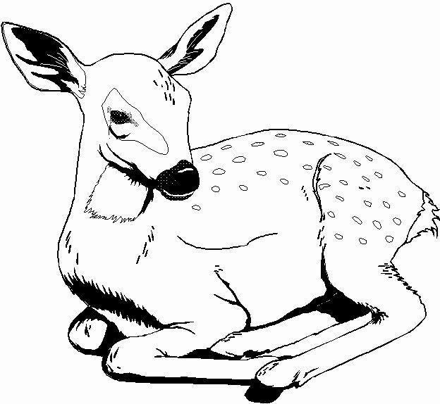 Wild Animals Coloring Page Unique Printable 35 Wild Animal Coloring Pages 3598 Coloring Deer Coloring Pages Animal Coloring Books Zoo Animal Coloring Pages