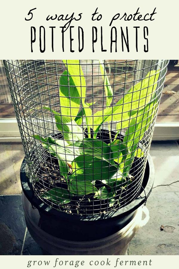 Potted Plants Need A Little More Protection From Cold Weather Than That Are In The Ground Here Five Ways To Protect Winter