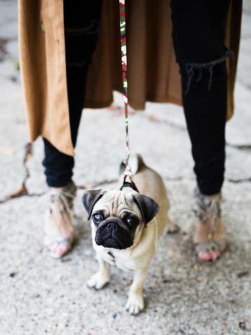 10 Best Dog-Friendly Cafés In London | Stylight