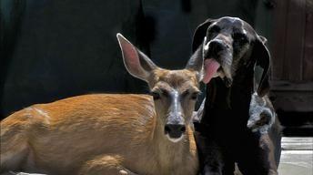 Animal Odd Couples - Full episode on PBS