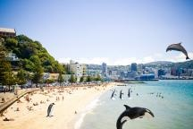 How the world sees #Wellington after a series of marine dwelling visitors.