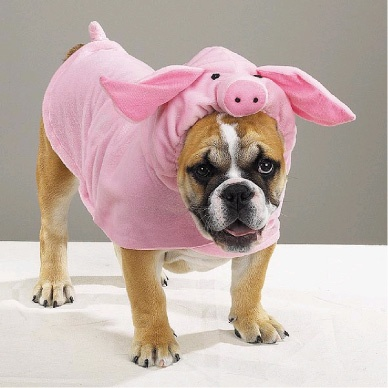 piggy dog | In Honor of National Dress Your Pet Up Day (1/14) with Crippen Buick GMC Mazda Volvo ...