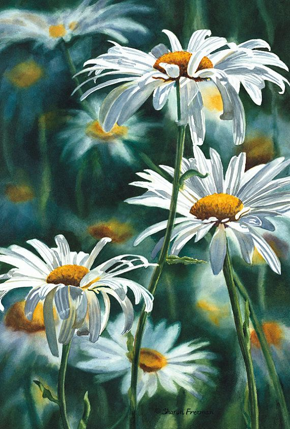 Shasta Daisy Fine Art Reproduction Watercolor Paper by ssfreeman43,