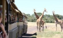 Amazing views from the new open-sided Safari Buses ~ Werribee Park, Zoo. Melbourne