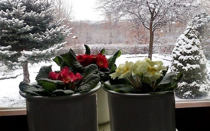 Titkos tavasz a téli tájban… - Németh György – Kerepes