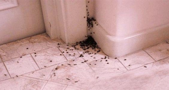 Comment se débarrasser des fourmis naturellement ? Des astuces pour éliminer les fourmis.