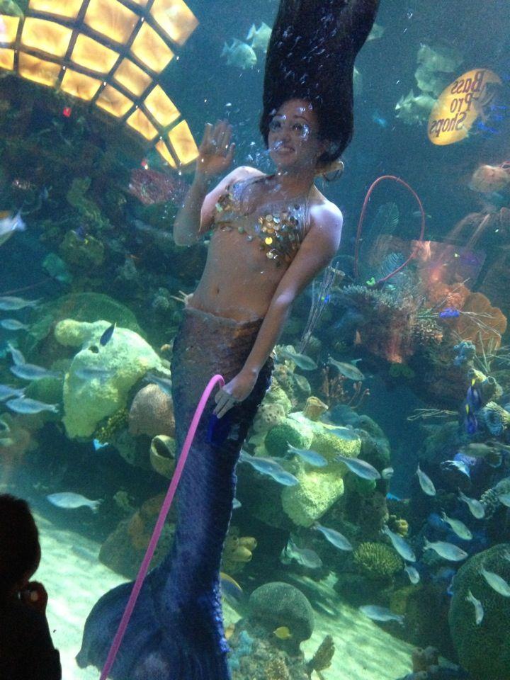 Vegas Hotel With Aquarium