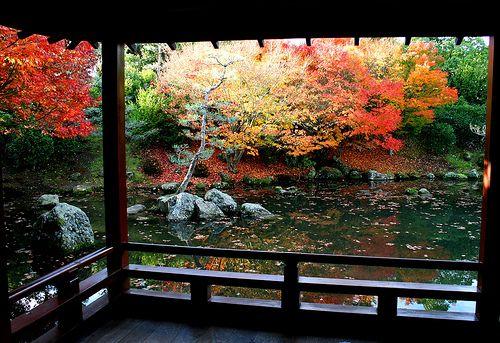 autumn ~ Japanese Garden, Hamilton Gardens