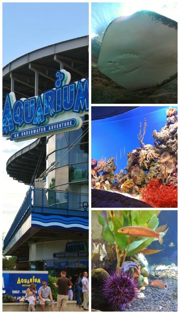 Denver Colorado The Denver Aquarium Is One Of The City S