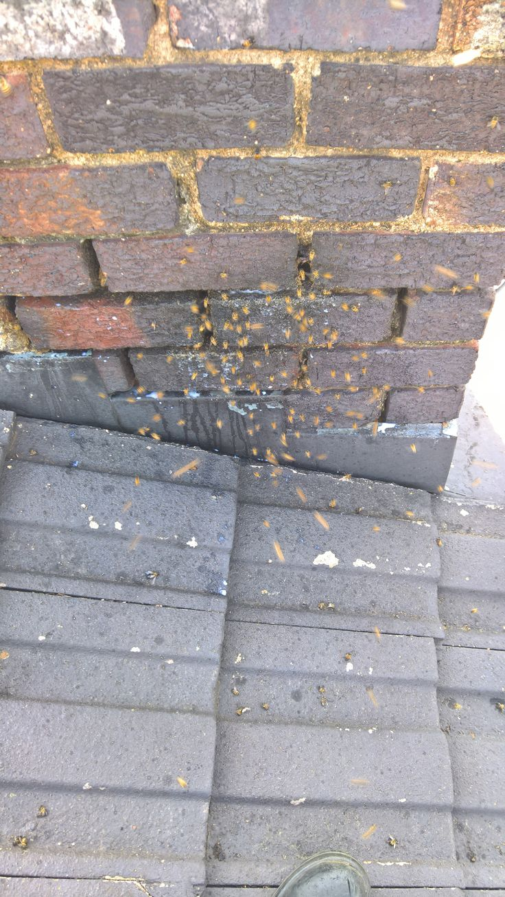 Bee removal in Johannesburg, bees removed on the roof ,Killarney