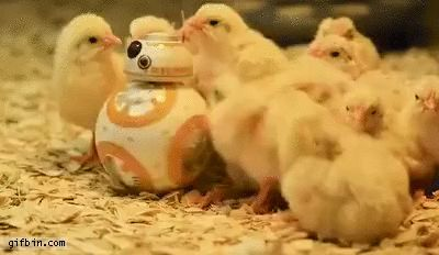 Chicks having fun with BB-8