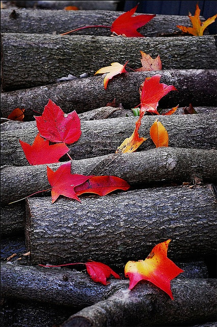 Autumn│Otoño - #Autumn