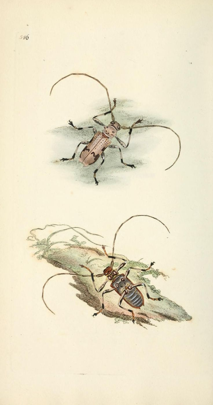 492 best insect images on pinterest insects insect art and