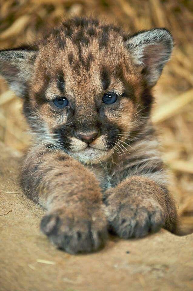 Bebe leopardo