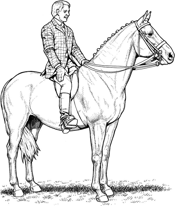 Coloring Horse Page Pages Good Wecoloringpage Horses Jumping Vi