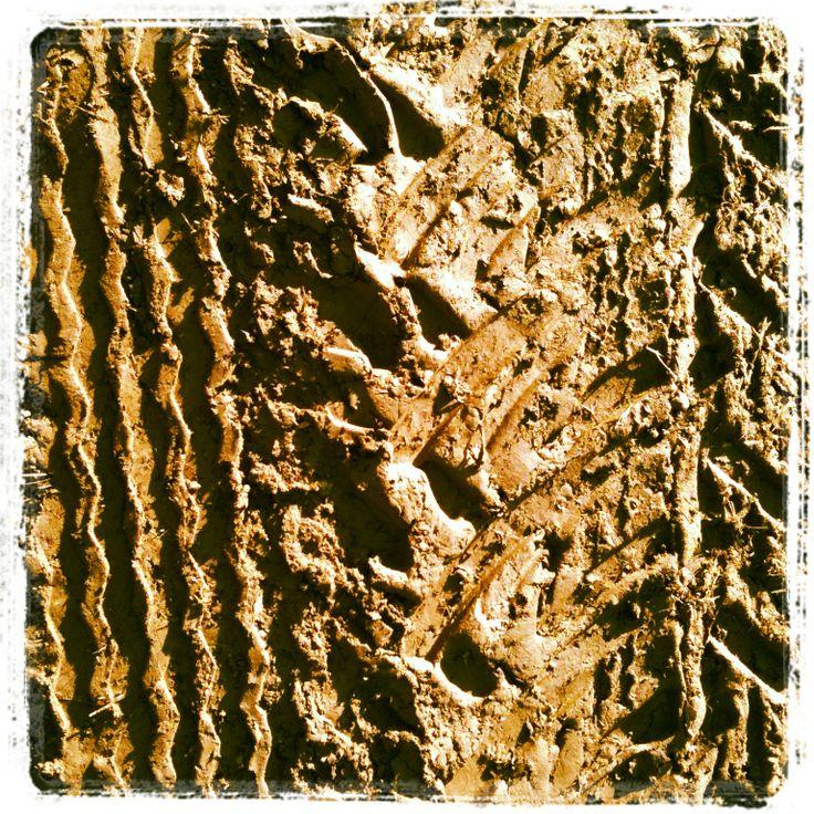 Impronta su fango